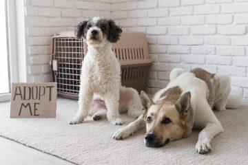 Honden adopteren asiel