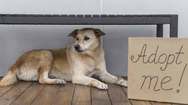 Honden uit het asiel