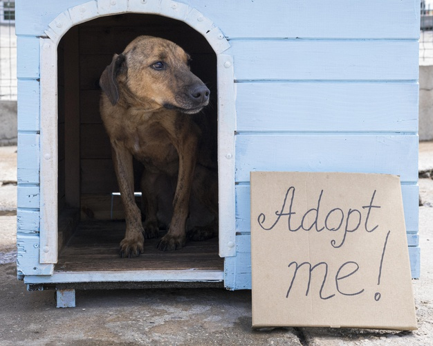 adopteer asielhonden