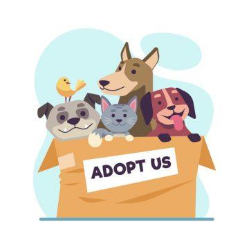 adopteren asielhond