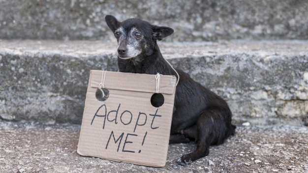 asiel hond