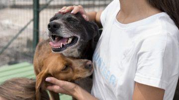 asiel honden