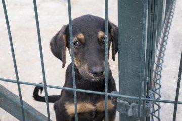 hondje uit asiel